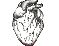 Bleeding Heart Illustration
