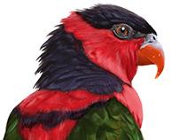 Colorful Parrots - Part One