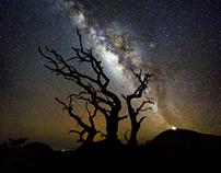 Mauna Kea Old Tree Milky Way
