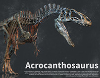 Acrocanthosaurus skeleton making