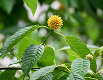 Kratom For Sale - Buy Kratom Near Me - Kratom Powder -