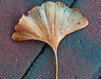 Wabi-Sabi (Leaves in Context)