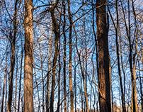 Winter Trees of Alabama