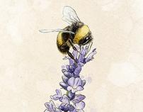 Darwin's Beekeeper - Garden Design Magazine, #199