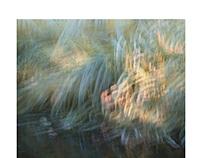 Perceptions Of A Pond - Volume Sixteen