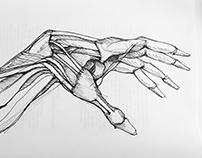 Human Anatomy Sketches