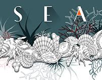 SeaShells Concept