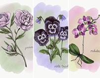 WIP: Botanical Illustrations