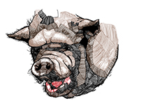 Cerdo / Pig