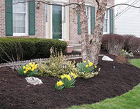 Content Writing: Benefits of Mulch