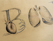 Anatomical Letters - Illustration