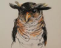 Malaysian Barred Eagle-Owl
