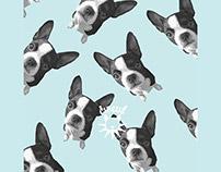 DoggyCircus branding