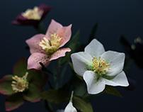 Paper Flowers: Hellebores