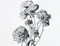 Still Life Drawing: Black & White