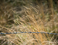 Barbed Wire in the Grass