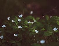 Little forest stars
