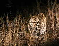 South African Safari 2016