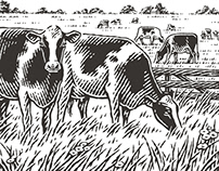 Cows for «Hutten Beef»