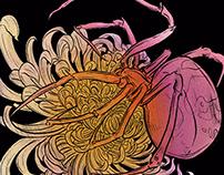 Spider And Chrysanthemum