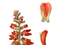 Botanical Illustrations (2011)