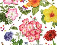 Botanical Art - Some of my botanical illustrations