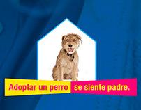 Adopta Perros (Ejercicios Underground)