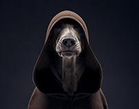 The Dog Show. Season 4
