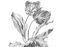 Herbier & herbier fantastique