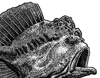 http://www.boardpusher.com/giantfrogfish