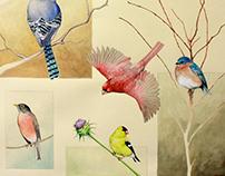 Nature Drawing 2014-15