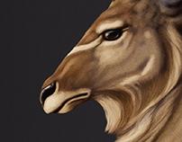 Kudu study