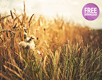 Free photo golden wheat field