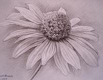 Drawing pencil Kamil Strzelecki