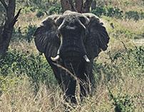 UGANDA, wildlife
