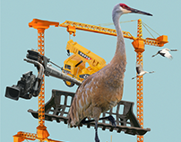 Homonym Project - Crane