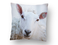 Animal Pillow Designs