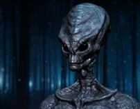 The Greys / Aliens