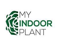 My Indoor Plant