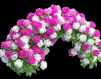 Plants Hydrangea set 04