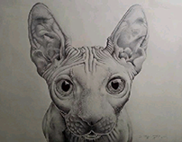 """Sphynx"" BIC ballpen drawing"
