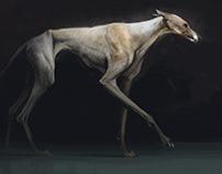 Some dog