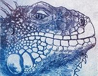 .iguana.