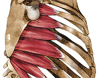 Anatomic illustration