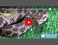 60-Second Snakes