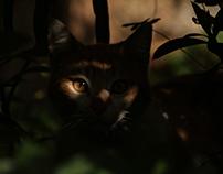 Cats Portfolio