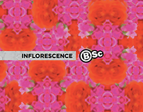 Body Science Summer Limited Edition Compression
