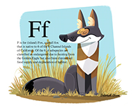 F is for Island Fox