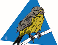 Aves endémicas de Bogotá. Ilustraciones 2018.