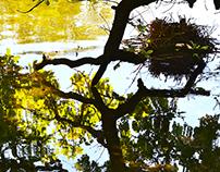 Nymphenburg Garden